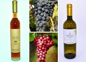 Каллаж с вином 1